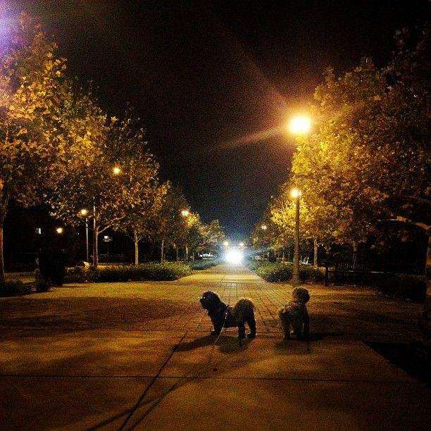 Arbors Of East Atlanta: 36 Best Rancho Cucamonga Lifestyle Images On Pinterest