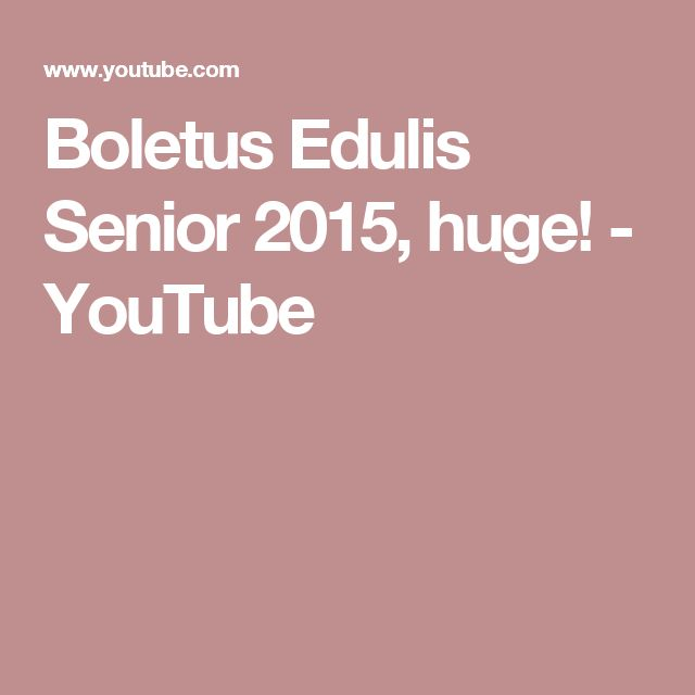 Boletus Edulis Senior 2015, huge! - YouTube