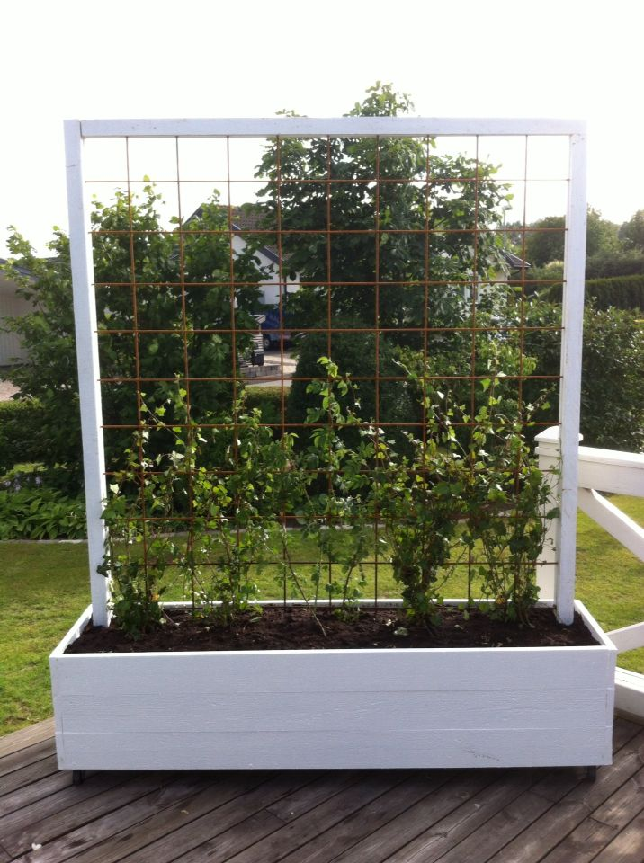 Garden planter with metal trellis.