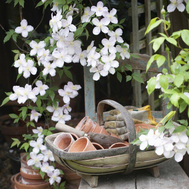 les 25 meilleures id es de la cat gorie plantes grimpantes sur pinterest fleuraison de la. Black Bedroom Furniture Sets. Home Design Ideas