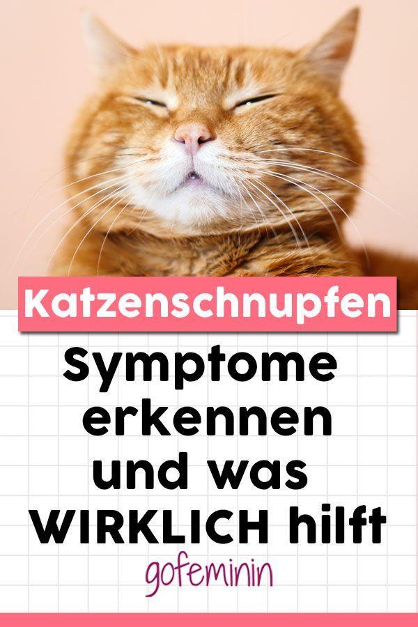 Katzenschnupfen Symptome Behandlung Und Was Wirklich Hilft