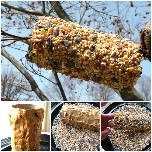 homemade bird feeder!!! awesome this would not only be fun for me but for kids i babysitt to