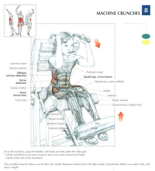 87 Best Anatomical Workout Chart Images On Pinterest Workouts Weights And Bodybuilding