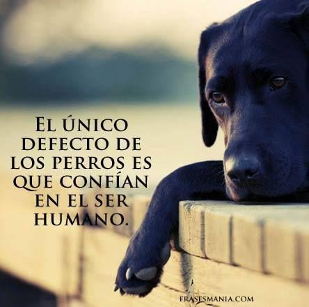 El unico defecto de los perros es que confian en el ser humano