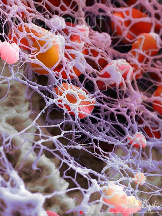 Human Blood Cells and Fibrin Network › Micronaut: The fine art of microscopy by science photographer Martin Oeggerli