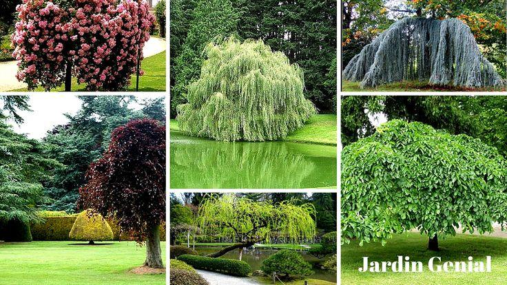 В саду будут отлично смотреться  плакучие деревья, которые оттенят  цветник или клумбу. Для центральной  части дачного сада подойдет  композиция из разных по высоте  плакучих деревьев. Их поникшие  кроны способны создать  настоящие тенистые аллеи.