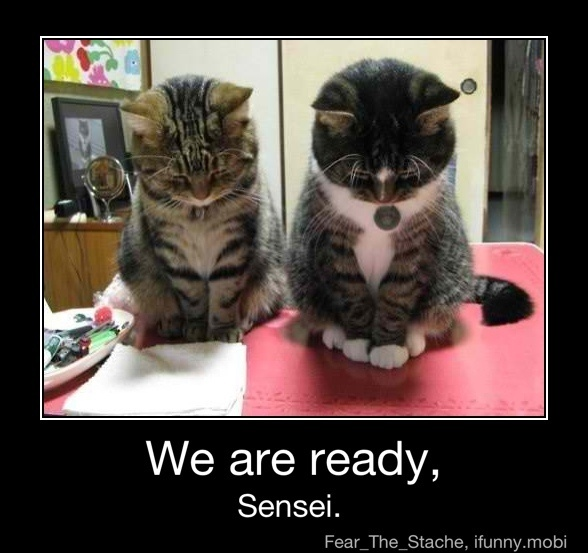 iFunny :): Prayer, Funny Cat, Pet, Funny Stuff, Funnycat, Grateful, Bows, Kittens, Animal Funny