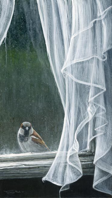 Friend At The Window - Sparrow  by Wildlife Artist Jeremy Paul