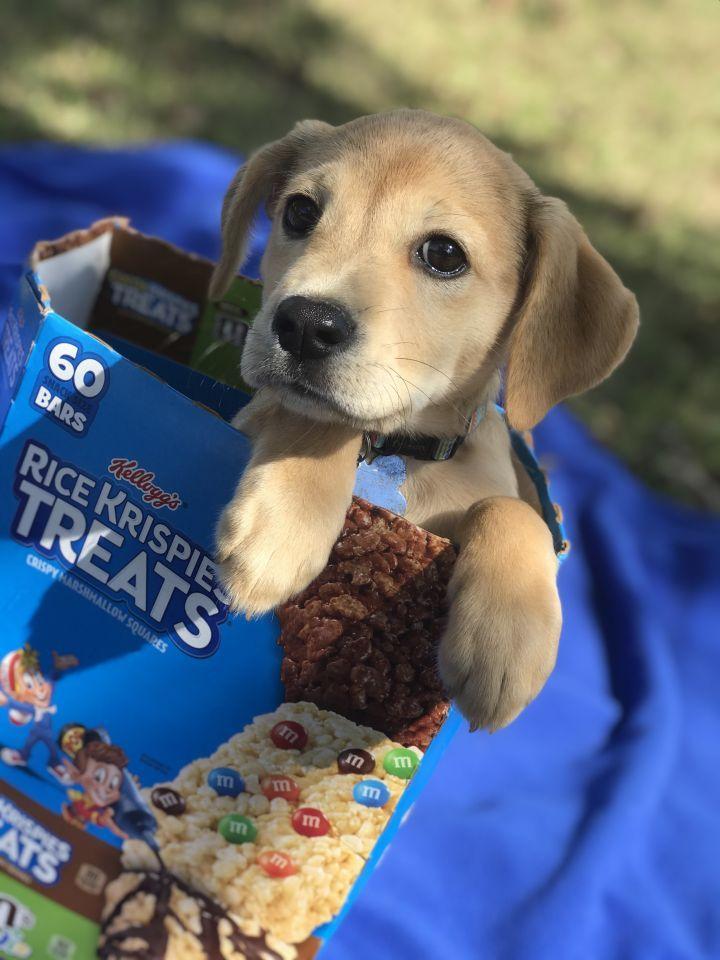 Adopt Pop On Petfinder Adoption Rescue Dogs Dog Adoption