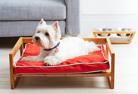 Best Dog Beds For Westies