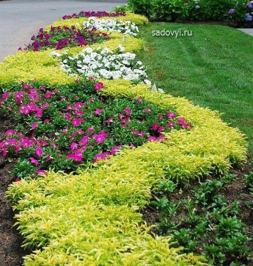 красивые цветники из петуний фото