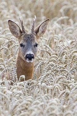 DeerbyChristoph Mischke