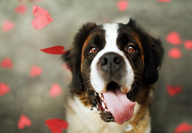 Ensaio fotográfico procura estimular a adoção de cães
