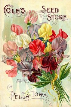 Victorian Seed Packets | Antique Seed Packets