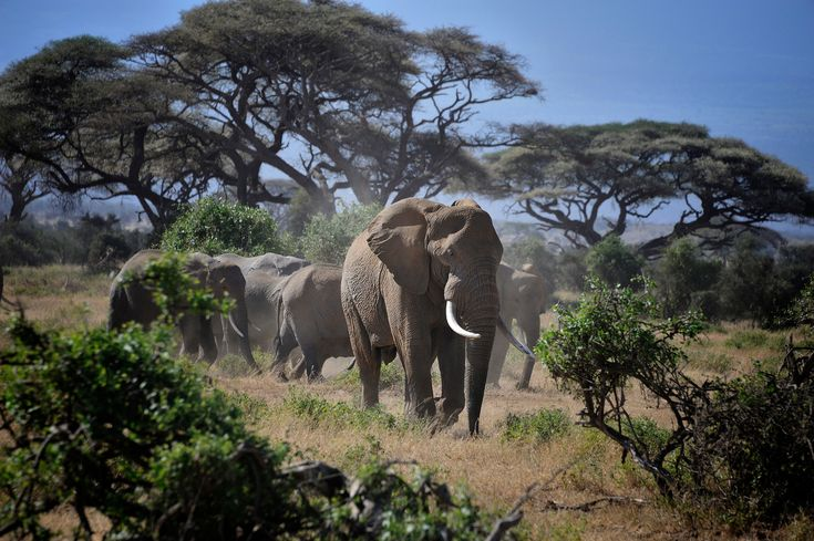 WTH! Is the Hong Kong Government Aiding the Illegal Ivory Trade?