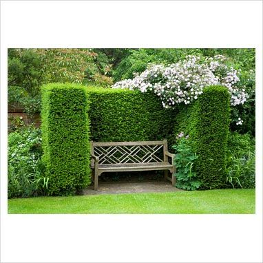 I am soooo doing this for two benches beside my driveway.  Boxwood hedge.