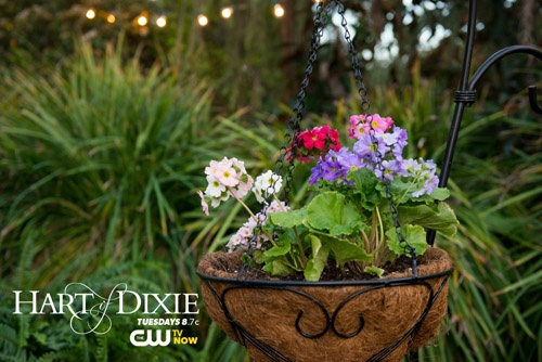 Springtime In My Town presented by The CW. Repin for a chance to win! #HartofDixie airs Tuesdays 8.7c. Visit www.cwtv.com/spring to enter. #PinToWin #contest #prizes #thecw