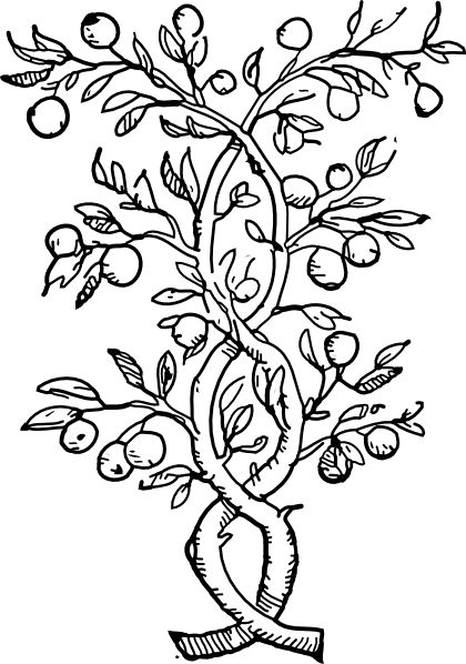 rainforest coloring pages 2png 420598