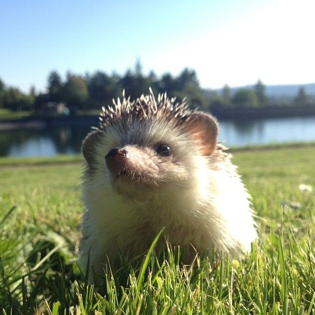 Biddy loves it when the sun is shining on his little quills.   The Fantastic Adventures Of Biddy The Hedgehog
