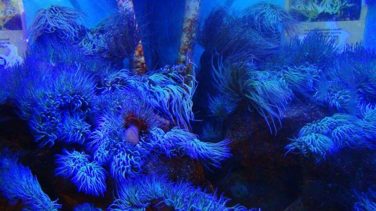 Blue reefs in London zoo