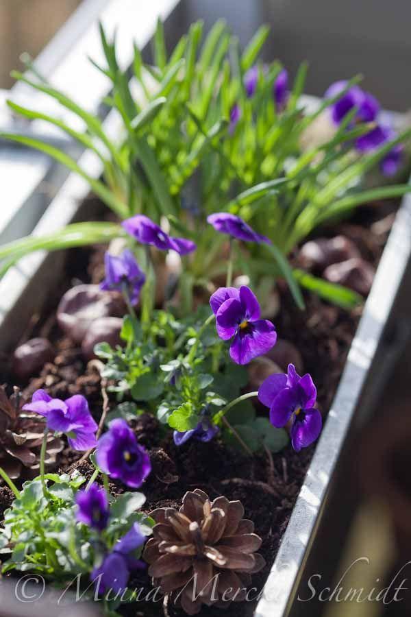 blomsterverkstad | Livet med trädgård, uterum och växter.