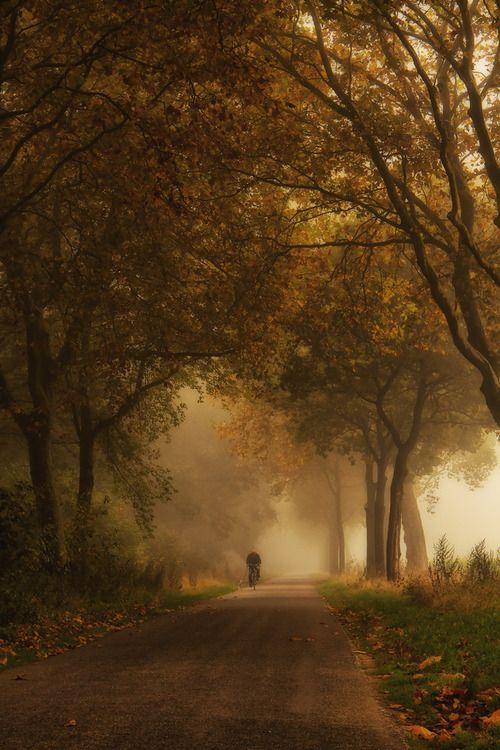 autumnal mist