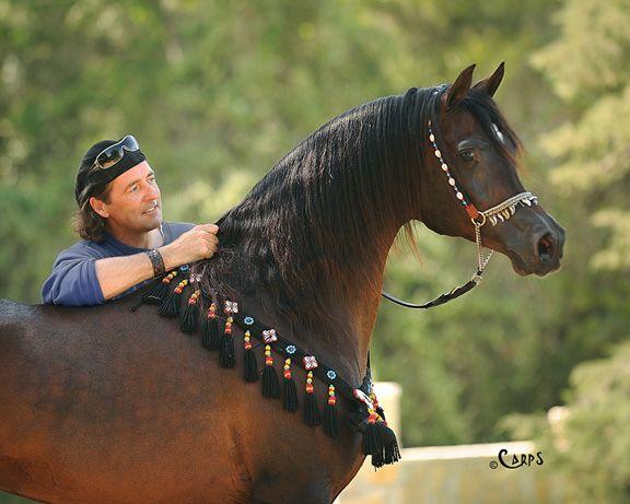 STUART VESTY WITH GAZAL AL SHAQAB :: Arabian Horse Global ... - photo#3