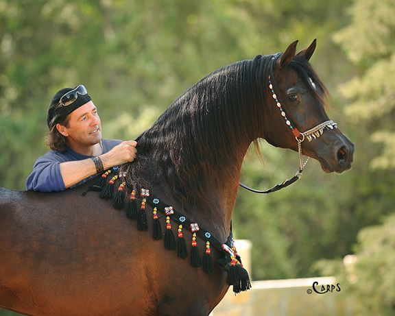 STUART VESTY WITH GAZAL AL SHAQAB :: Arabian Horse Global | Promoting the Arabian Horse Around the World