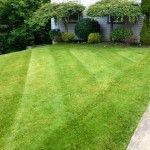 Striped Lawn -  monroeville, capscape, scotts, fertilizer, landscaping, lawn, care