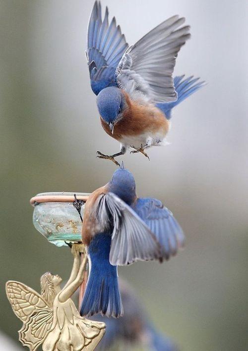 Fée with~Beautiful Birds~