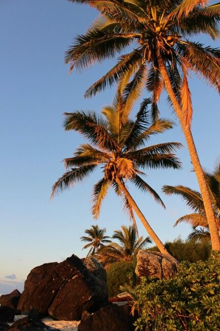 Rarotonga by Stefanie McGregor