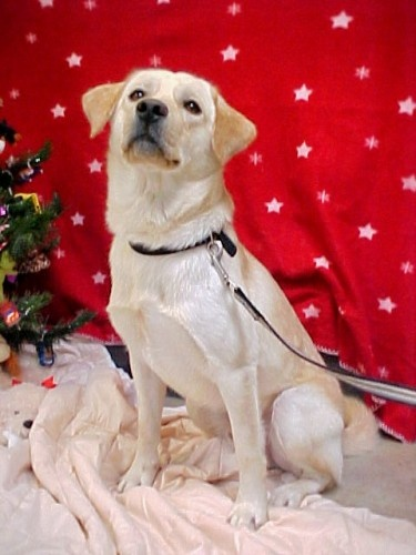This is the oldest-known picture of Clyde, taken by the people that run the animal shelter that Stacy adopted him from in 2009 (Photo taken circa December 2008)