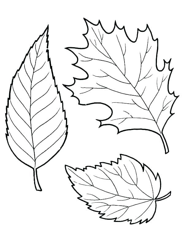 photo regarding Free Printable Fall Leaves known as Tumble Leaves Coloring Web pages Little ones Informative Recommendations Slide