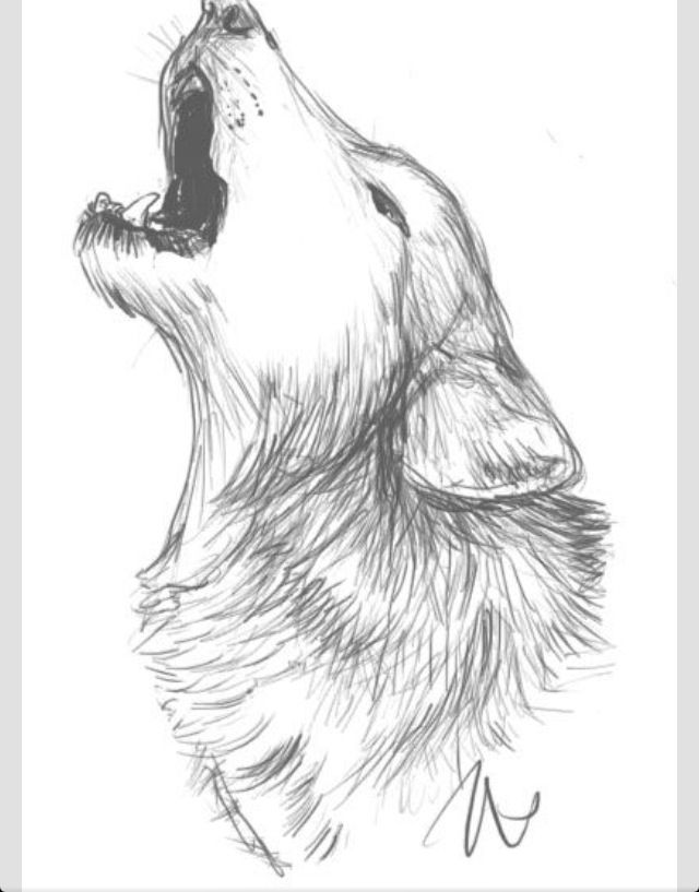 Wolf howling Wolf sketch Wolf art | Tattoo | Pinterest ...