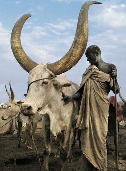 Africa |  Dinka man with his Namesake Ox. | ©Carol Beckwith and Angela Fisher