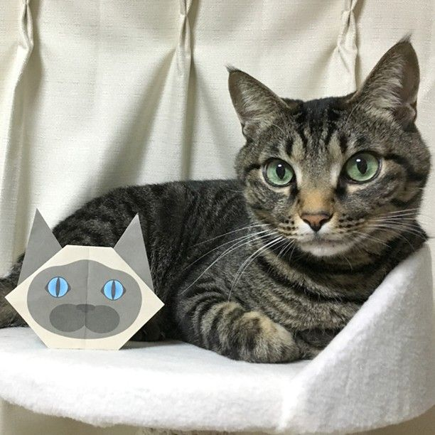 Siamese cat origami is one of my favorite <3  シャム猫さんってかわいいよね~  #cat #neko #catsofinstagram #origami