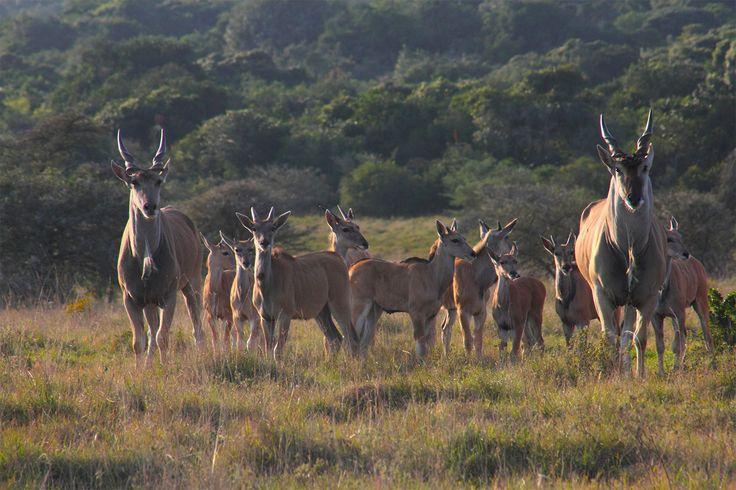 One big happy family. Photo Taken by Diane Morrison on Amakhala Game Reserve.