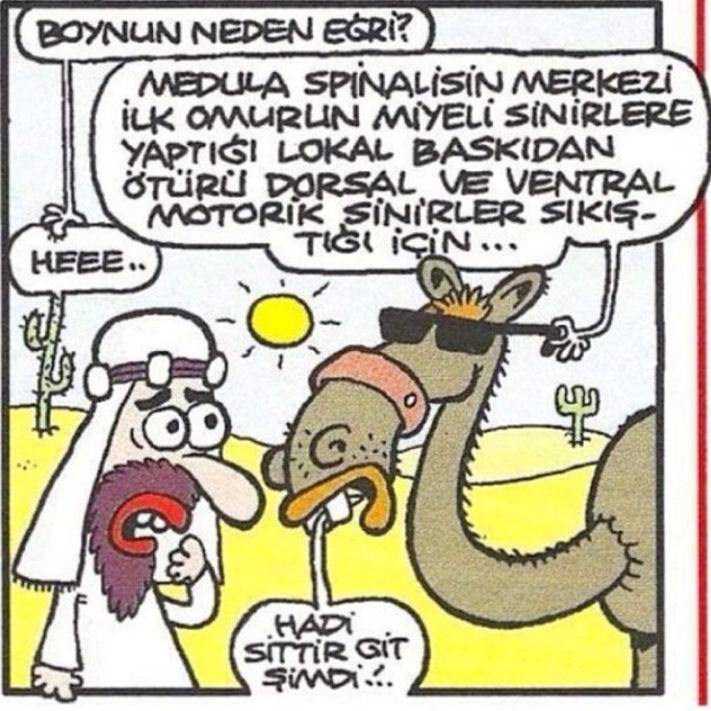 Boynunun neden eğri olduğunu açıklayan deve... #komik #karikatür #karikatur…