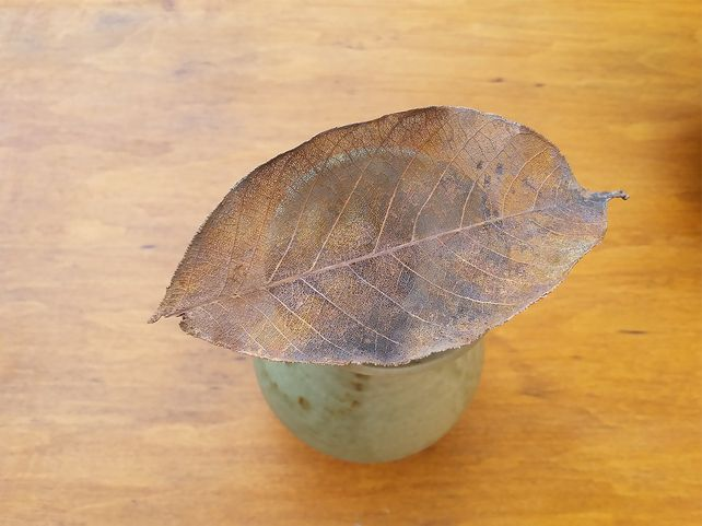 Skeleton Rubber Leaf  £24.00