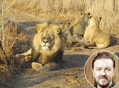 """Ricky Gervais Calls Killing of Cecil the Lion """"Mental"""" - Us Weekly"""