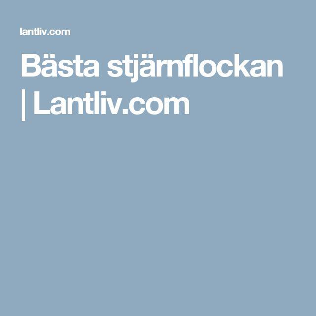 Bästa stjärnflockan   Lantliv.com