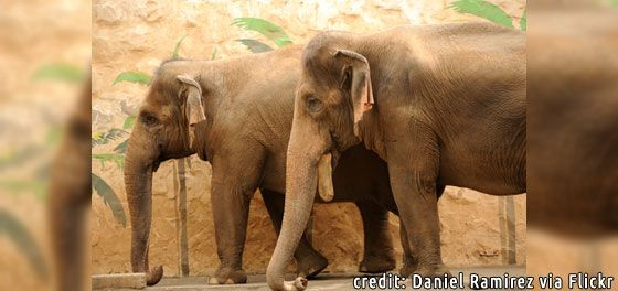 Free Elephants Vaigai and Mari from the Dysfunctional Zoo - In Defense of Animals    Help send Vaigai and Mari to a safe accredited sanctuary    https://secure2.convio.net/ida/site/Advocacy?cmd=display&page=UserAction&id=3035