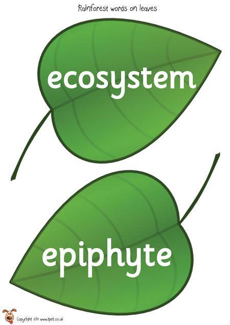 Teacher's Pet - Rainforest Words (on leaves) - FREE Classroom Display Resource - EYFS, KS1, KS2, rain, forest, deforestation, trees, monkeys, snakes, parrots, sustainability