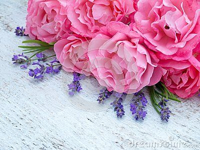 Curly pink roses and lavender bouquet on the white painted rustic background