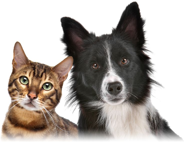 Pet insurance: cat, horse and dog insurance - MSE