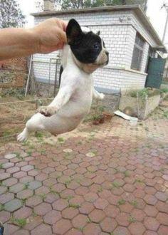 dog | Sumally もっと見る