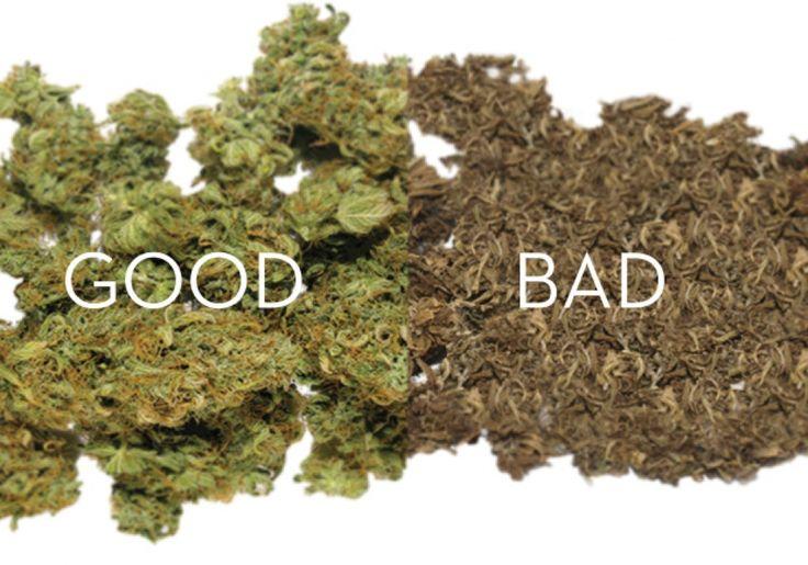 Siempre es buen momento para disfrutar de las cualidades de la marihuana. Sabores terrosos, c&iacut