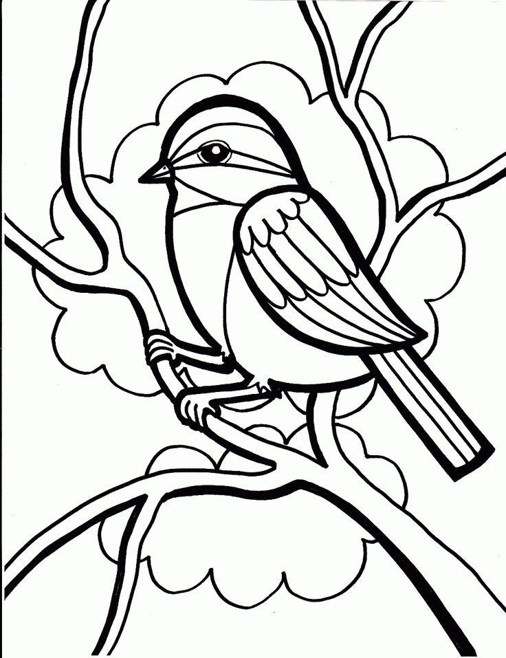 Oiseau - Bird