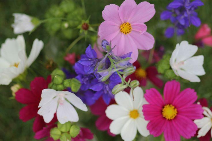 Waa 't is goei weer, volop feest in de tuin met heerlijke kleuren;
