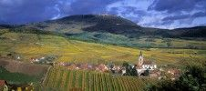 Découvrez la beauté de la célèbre Route des vins d'Alsace, un itinéraire mythique !  La culture de la vigne et du vin, indissociable de l'histoire de l'Alsace, est présente de manière vivante dans les paysages, les traditions et le patrimoine.  La route des Vins d'Alsace, l'une des plus ancienne de France, c'est aussi une multitude de villages fleuris, tous différents mais tous dotés d'un charme indémodable.